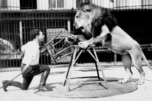 Clyde Beatty taming a lion with a chair (Image from Harvard Library)